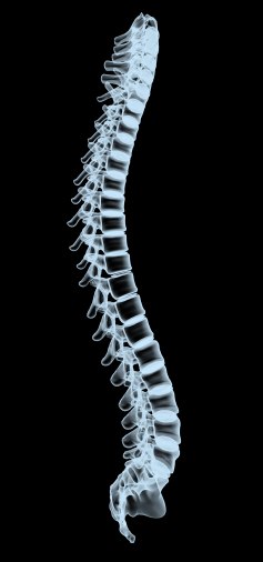 Chiropractic Care - Spine X-Ray, Family Chiropractic Center of Bayonne, New Jersey